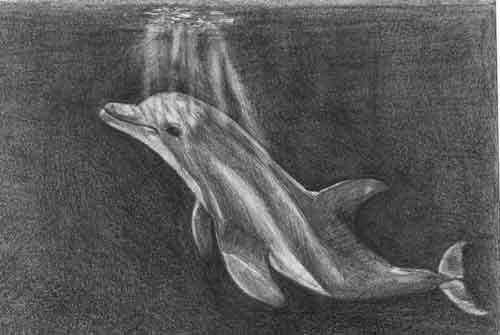 dolphinsweb